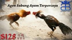 Agen Sabung Ayam Terpercaya